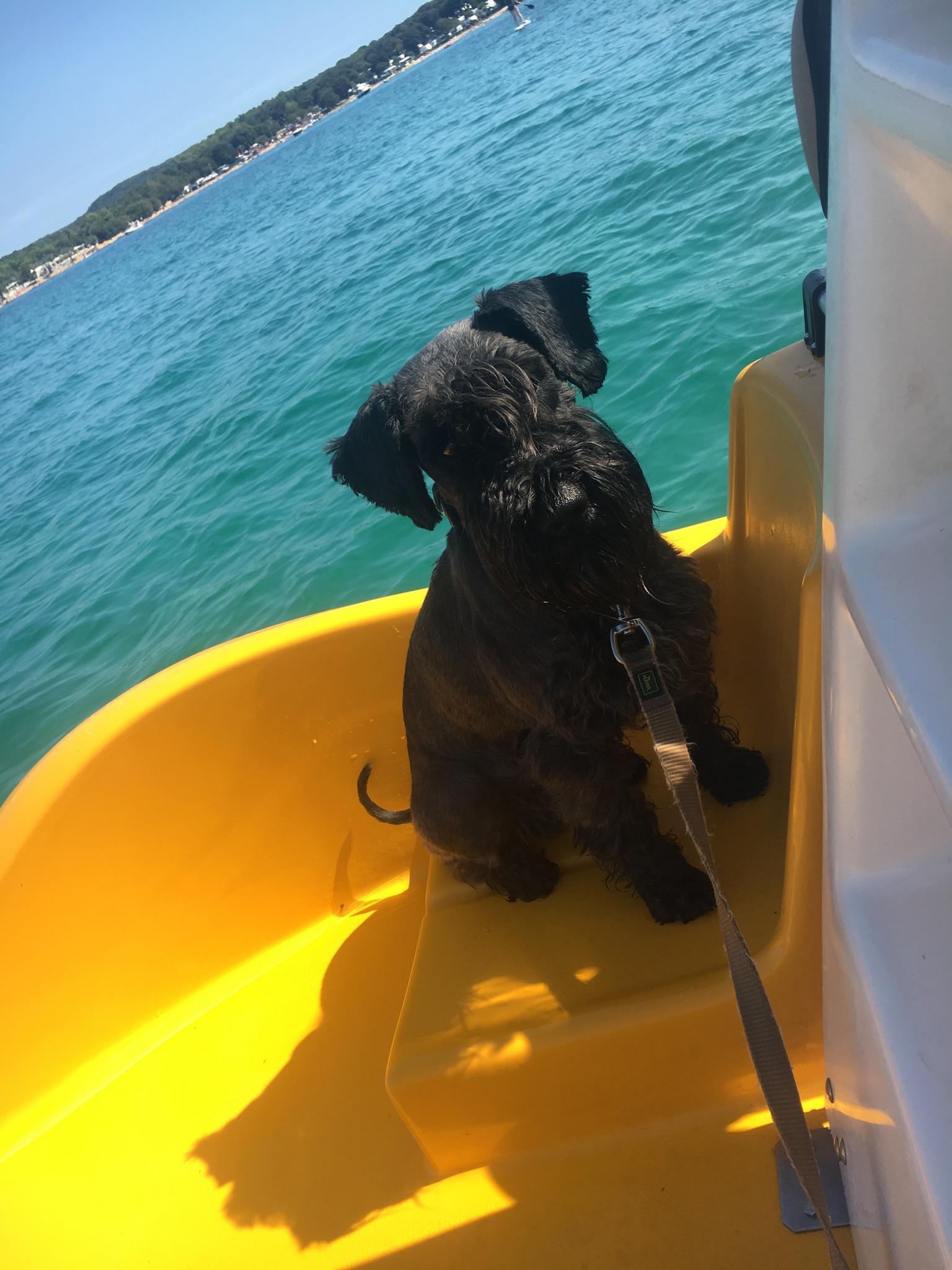 Auch mit Hund darf man Treetboot fahre